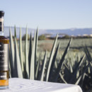 Which plant is used to produce Tequila?