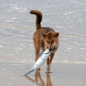 Which dogs are known to eat fish?
