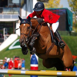 What type of horse is best for show jumping?
