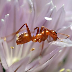 When an ant walks, how many of its legs touch the ground?