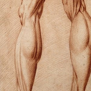 What is the longest human muscle?