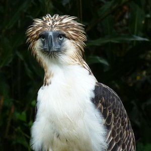 Monkey-eating eagle can be found in ...