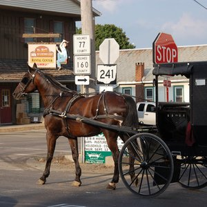 What are Amish men not allowed to do?